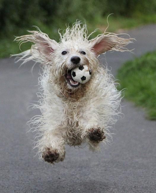 Linda Lamb (Happy Dog)