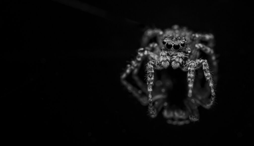 Spider Madness by Sue Holte-Smith
